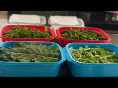 YouTube Carne, Green Beans, Fruit, Vegetables, Food, Diabetes, Youtube, Tasty Food Recipes, Rosemary Tea