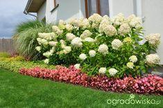 4 pory roku w ogrodzie - strona 16 - Forum ogrodnicze - Ogrodowisko