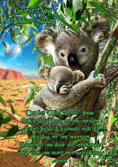 Afrikaanse Quotes, Goeie Nag, Goeie More, Animals, Animales, Animaux, Animal, Animais