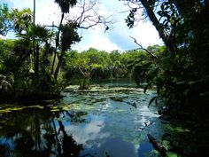 Paisaje que los campers recorren en canoas en Riviera Maya