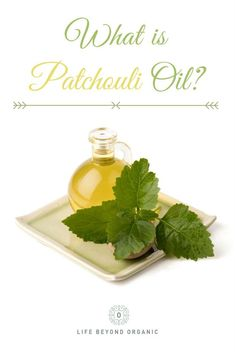 Get to know more about this amazing essential oil and its many wonders! Patchouli Oil, Patchouli Essential Oil, Essential Oil Uses, Healthy Drinks, Get Healthy, Healthy Habits, Healthy Eating, Healthy Weight Loss, Natural Health