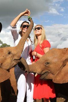 David Sheldrick Wildlife trust #ivoryforelephants #elephants #stoppoaching