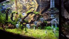 Live Aquarium Plants, Nature Aquarium, Planted Aquarium, Large Fish Tanks, Tropical Fish Tanks, Betta Fish Tank, Aquarium Fish Tank, Fish Tank Decor, Aquarium Architecture