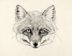 Google Image Result for http://favim.com/orig/201106/24/black-and-white-cute-drawing-fox-foxy-loxy-graphite-Favim.com-81970.jpg