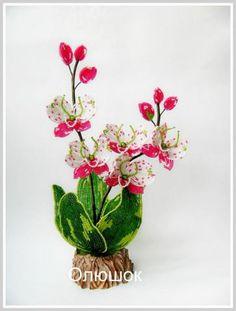 Лелия-Орхидея-бабочка.