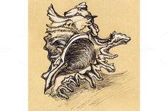 Vintage seashell sketch ink line art by Art By Silmairel on @creativemarket