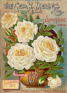 1000+ images about vintage seeds on pinterest | seed
