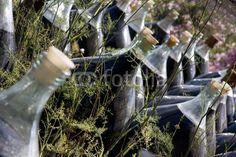 Bonbonnes de Banyuls
