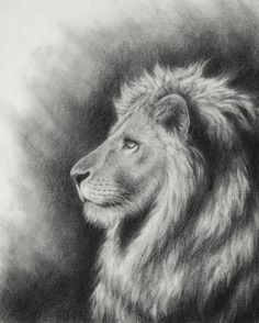Lion of Judah artwork image.Aslan,Chronicles of Narnia C.the Lion of the tribe of Judah.Revelation Lion of Judah drawing. Lion Of Judah Jesus, Lion Profile, Animal Drawings, Art Drawings, Pencil Drawings, Aslan Narnia, Lion Sketch, Lion Illustration, Tribe Of Judah