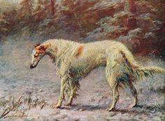 Earl, Maud (b,1864)- Borzoi, 1907