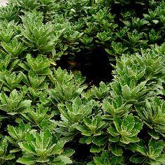 #flower, #typeofflower, #plant, #typeofplant, #garden, #gardenparadise, gardenscenery, #scenery