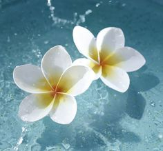 Frangipani make me dream of tropical island destinations