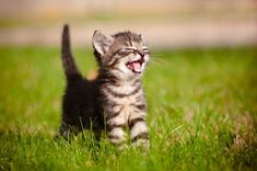 Sometimes you just need to look at some adorable happy kittens to get through the day.