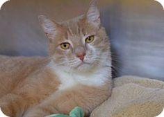 Tom (FIV )- adopted!