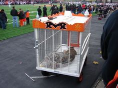For years, a school has been using a live tiger cub as its mascot at football… Massillon Ohio, Football Usa, Baby Tigers, Live Animals, Network For Good, Tiger Cub, Extinct Animals, Stop Animal Cruelty, Create Awareness