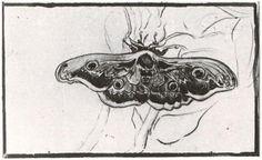 Google Image Result for http://www.vangoghgallery.com/catalog/image/1523/Great-Peacock-Moth.jpg