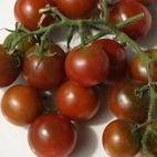Brown Berry tomatoes Arrowhead Farm