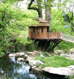 Tree house in a gorgeous location!