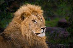 Mara Royalty by Mario Moreno on 500px