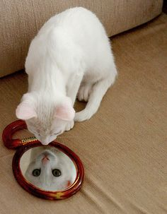 Kitty in the mirror