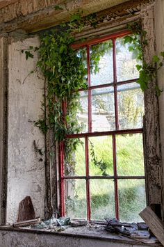 The ivy window