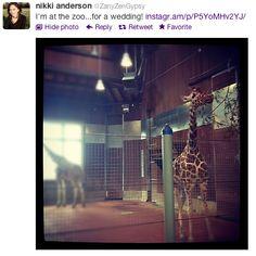Wedding in a zoo! Via @ZanyZenGypsy