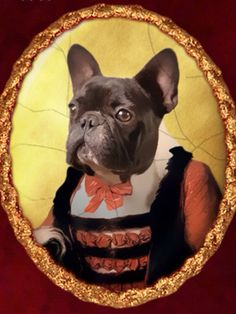 A Most Noble French Bulldog.