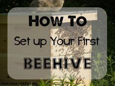 To Set Up Your First Beehive How to set up your first beehive--detailed instructions for those installing either packaged bees or Nucs this spring!NUC NUC or Nuc may refer to: Package Bees, Bee Hive Plans, Beekeeping For Beginners, Raising Bees, Buzz Bee, Bee Boxes, Backyard Beekeeping, Backyard Chickens, I Love Bees