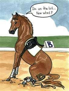 A horse after my own heart! (I ride bitless.)