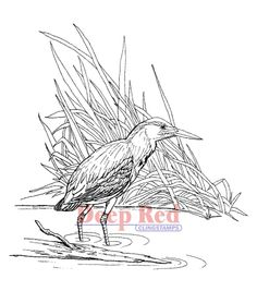 Green Heron Coloring Page From Category Select 21274 Printable Crafts Of Cartoons Nature Animals Bible And Many More