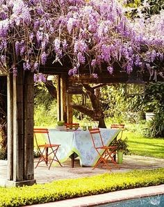wisteria covered pergola.