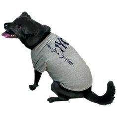 f4abbf6c5 38 Best Yankees Dogs images