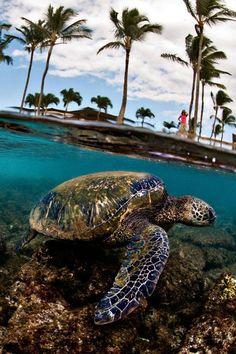 turtle in the tropics