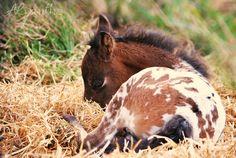 Foal by ~Alvanthe on deviantART