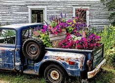 48 Beautiful Flower Truck Ideas For More Exciting Old Pickup Trucks, Farm Trucks, Country Trucks, Flower Truck, Flower Car, Most Beautiful Flowers, Beautiful Pictures, Vintage Trucks, Flower Beds