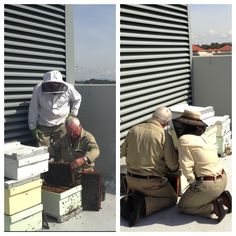 Getting to work: our master beekeeper, my Dad, checks Canberra Urban Honey hives