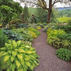 Hostas: These plants make great borders in semi shady areas and grow in zones 3-9. Hostas like rich and moist organic soils, and they like morning sun and afternoon shade. Hostas are heavy feeders and fertilizer should be applied in early spring and again in mid-summer.