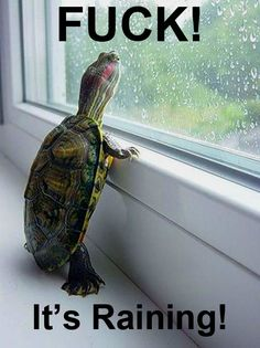 I just think the pic of the turtle is so cute Laugh Till You Cry, I Love To Laugh, Laugh Out Loud, Make Me Smile, Funny Quotes, Funny Memes, Hilarious, Jokes, Funny Captions