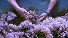 Coral reefs are in trouble. Meet the people trying to rebuild them.