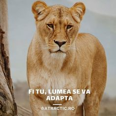 ☆ATRACTIC (@atractic) • Instagram photos and videos Photo And Video, Videos, Fitness, Photos, Animals, Instagram, Pictures, Animales, Animaux