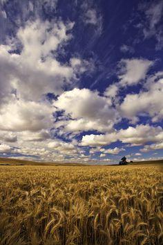 Palouse wheat field near the Washington-Idaho border, US