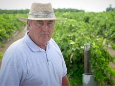 Feds vs. Raisins: Small Farmers Stand Up to the USDA