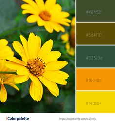 Color Palette Ideas from Flower Yellow Flora Image Colour Pallete, Color Palettes, Color Combinations, Colorful Flowers, Wild Flowers, Find Color, Flower Images, Color Shades, Color Inspiration