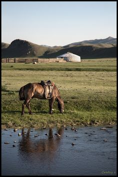 Mijn grootste droom: te paard door mongolie reizen!