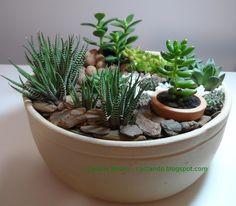 Just for pic Succulent Landscaping, Succulent Gardening, Succulent Terrarium, Succulents In Containers, Cacti And Succulents, Planting Succulents, Small Cactus Plants, Cactus Plante, Inside Plants