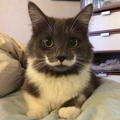 Every moment of Hamilton the Hipster Cat's life. I Love Cats, Crazy Cats, Cute Cats, World Cat Day, Mustache Cat, Funny Animals, Cute Animals, Cat Photography, Here Kitty Kitty