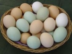Easter Egger Chickens lay beautiful eggs <3