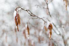 Modne raker kjemper mot vinterens siste favntak...