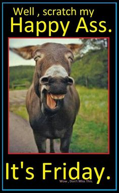 laughing animals - donkey Check out these fantastic photos of laughing animals that are so delightful they will make you giggle. And if the photos don't make you laugh, the animal-themed jokes alongside certainly will. Laughing Animals, Smiling Animals, Happy Animals, Animals And Pets, Funny Animals, Cute Animals, Wild Animals, Animal Memes, Beautiful Creatures