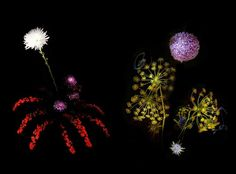 Flowerwork: A Photographic Series of Flowers Arranged to Resemble Exploding Fireworks | Junkculture